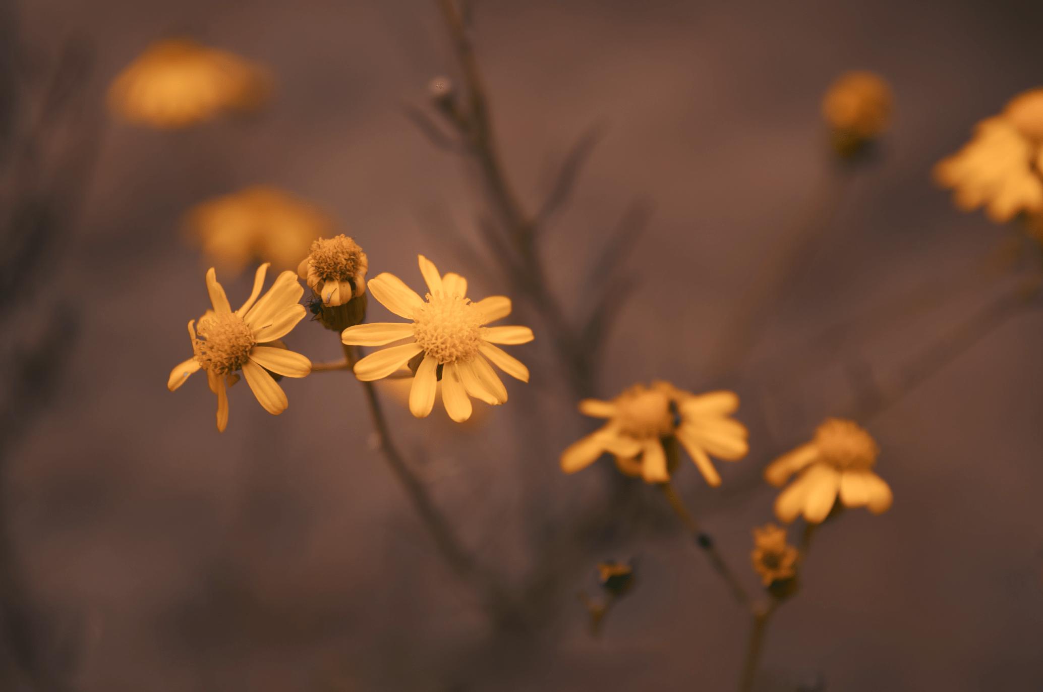 FLOWERS-01-min